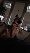 SmokeDex Profilbild von Shepperd1337