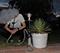 SmokeDex Profilbild von zlCrxncK